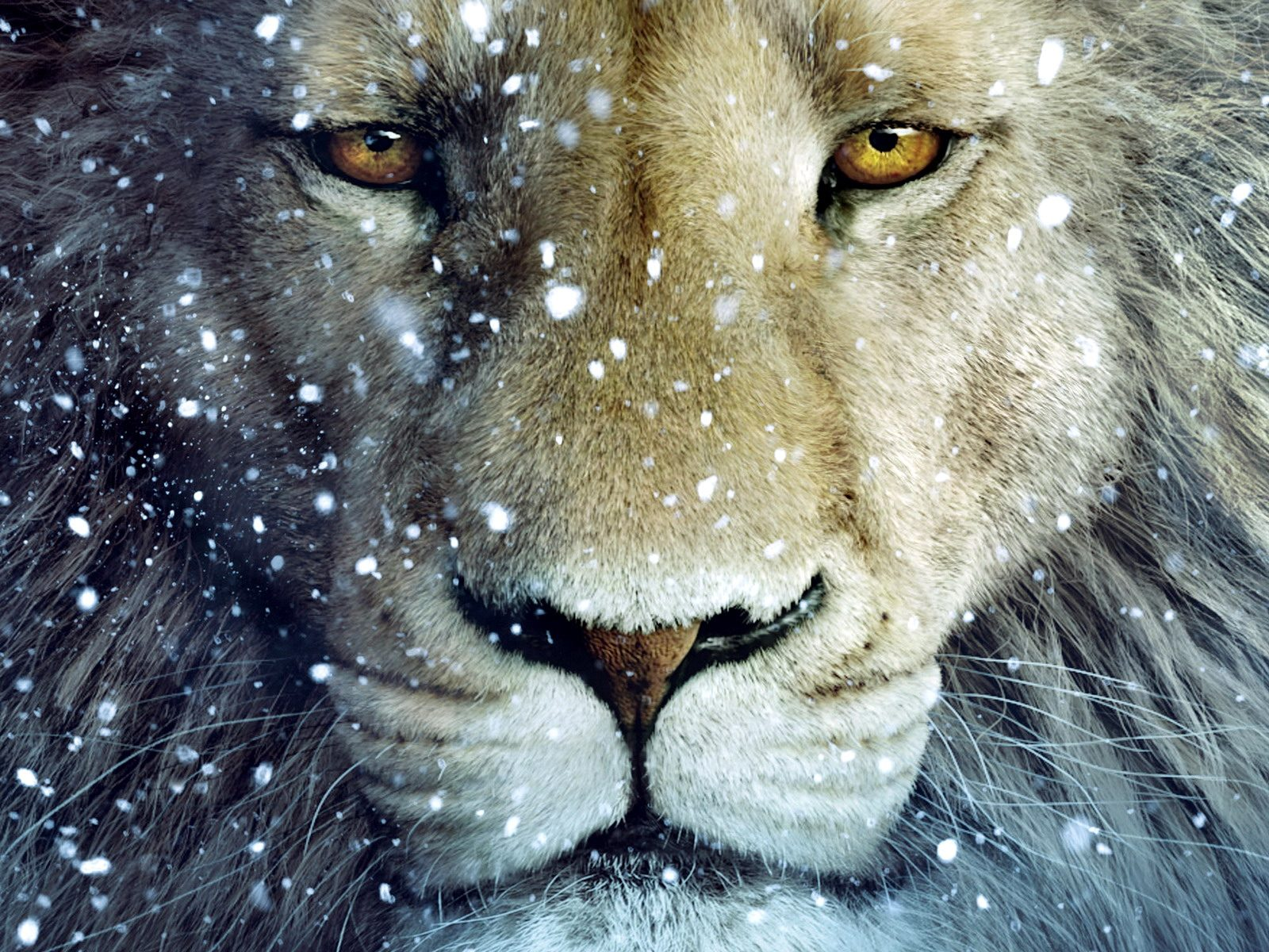 http://3.bp.blogspot.com/-gBNkI6JvpgA/TuOXw_h1CAI/AAAAAAAABds/-YzJMpImI4I/s1600/Aslan-Lion-3-The-Chronicles-of-Narnia-Wallpaper.jpg