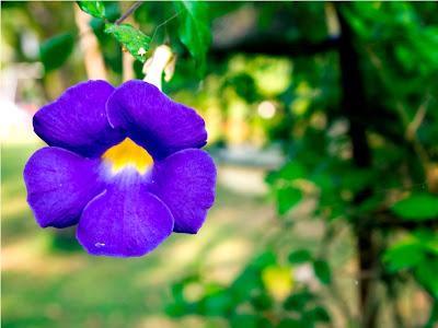 Blue flower close-up