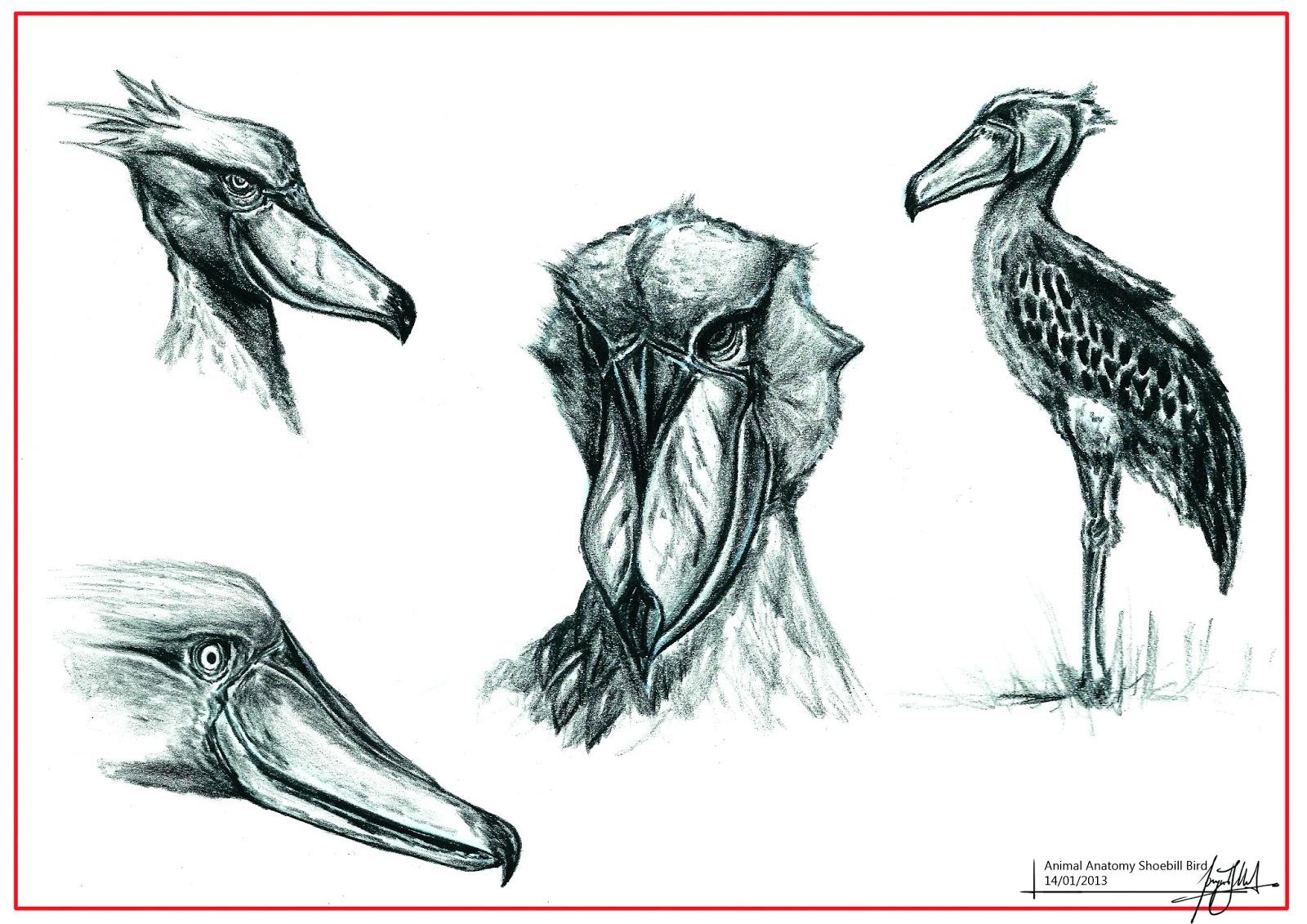 grandpriy: Animal Anatomy Studies