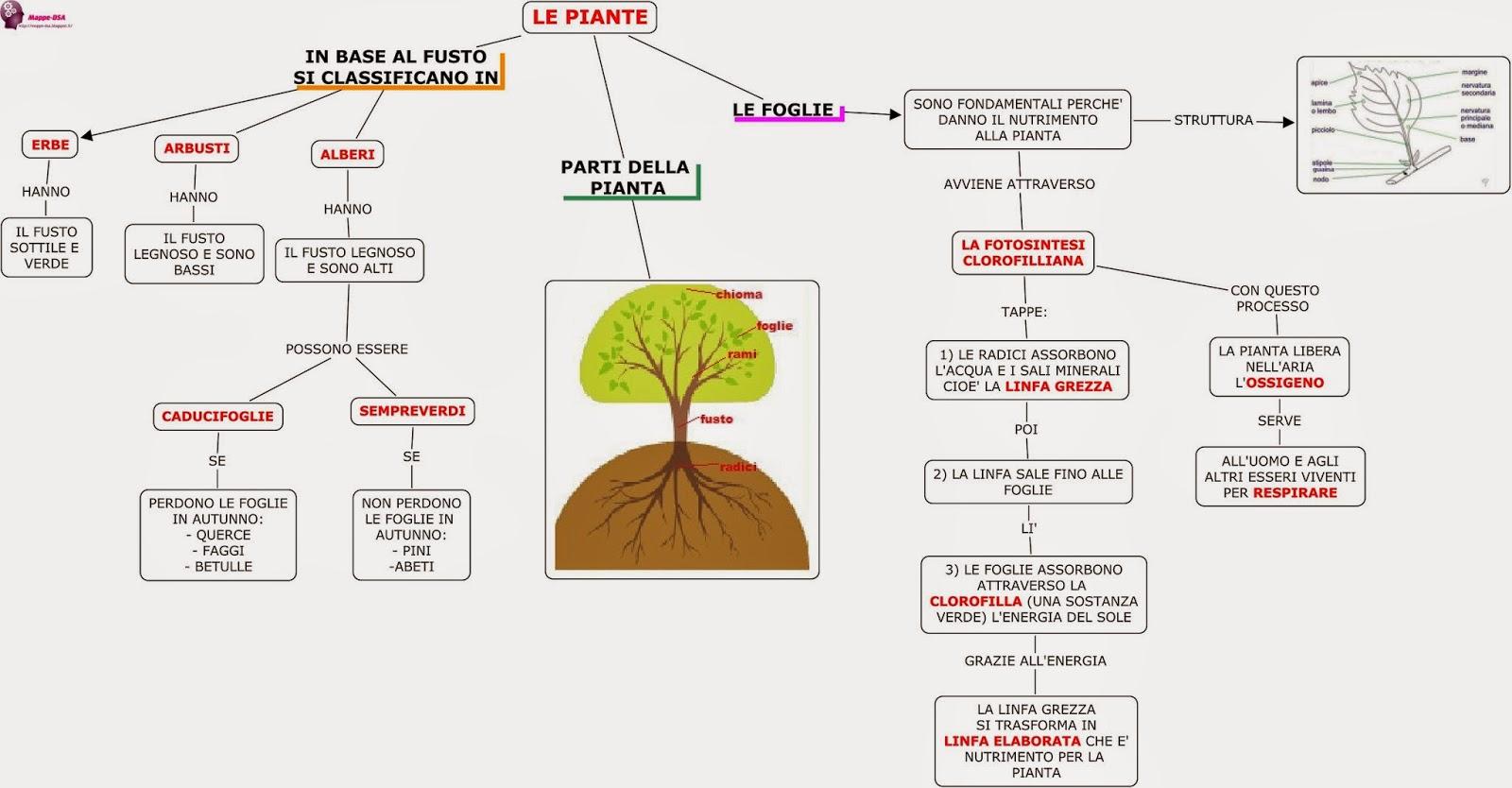 mappe dsa scienze piante