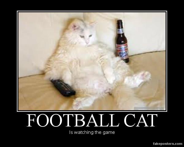 Funny Cat Beer