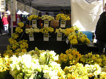 Daffodils at Farmer's Market