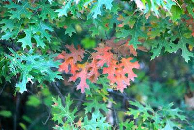 leaf by leaf, change occurs