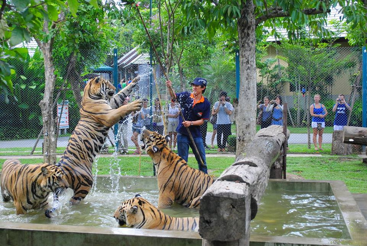 Lets go Chiang Mai: Private Tou to Chiang Mai Tiger Kingdom