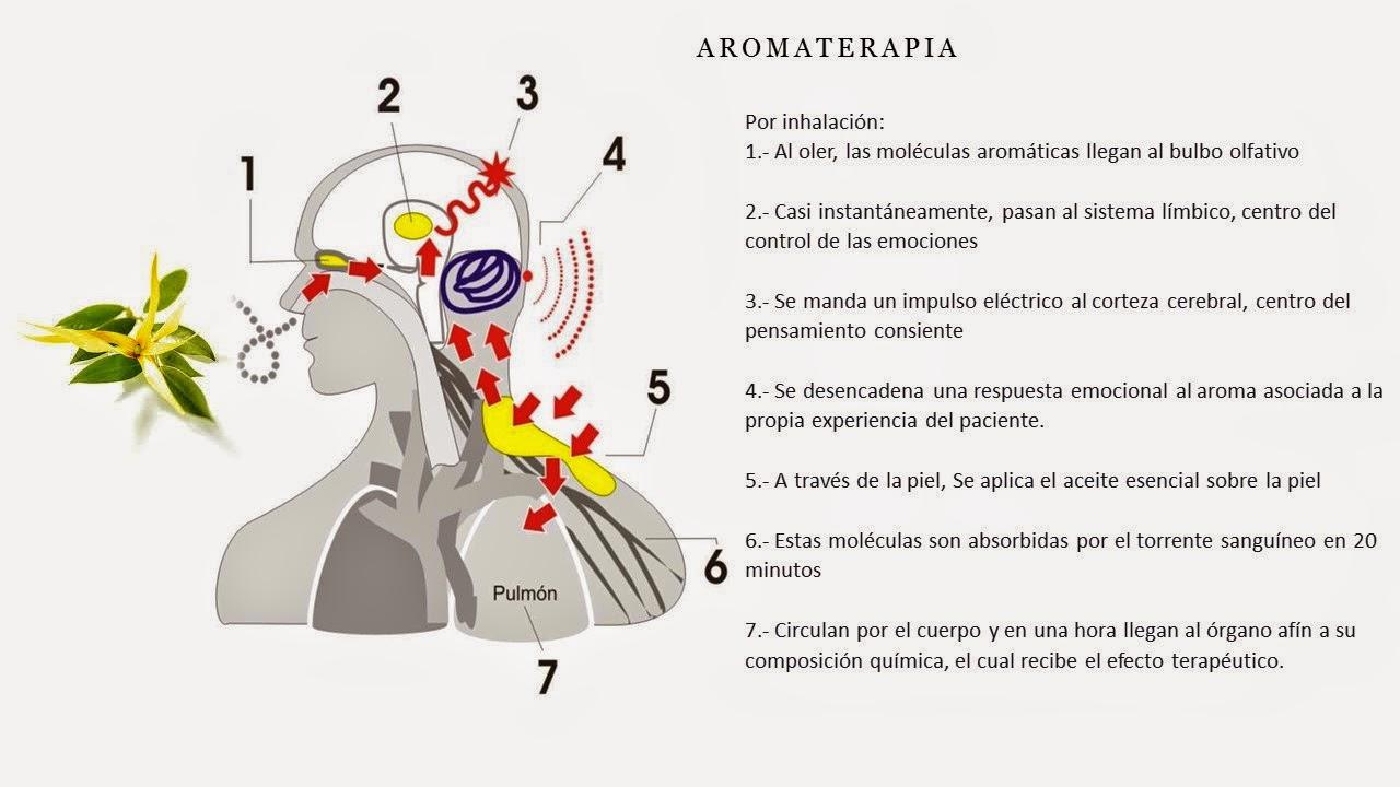 Las revocaciones sobre el masaje de la cabeza a la caída de los cabello