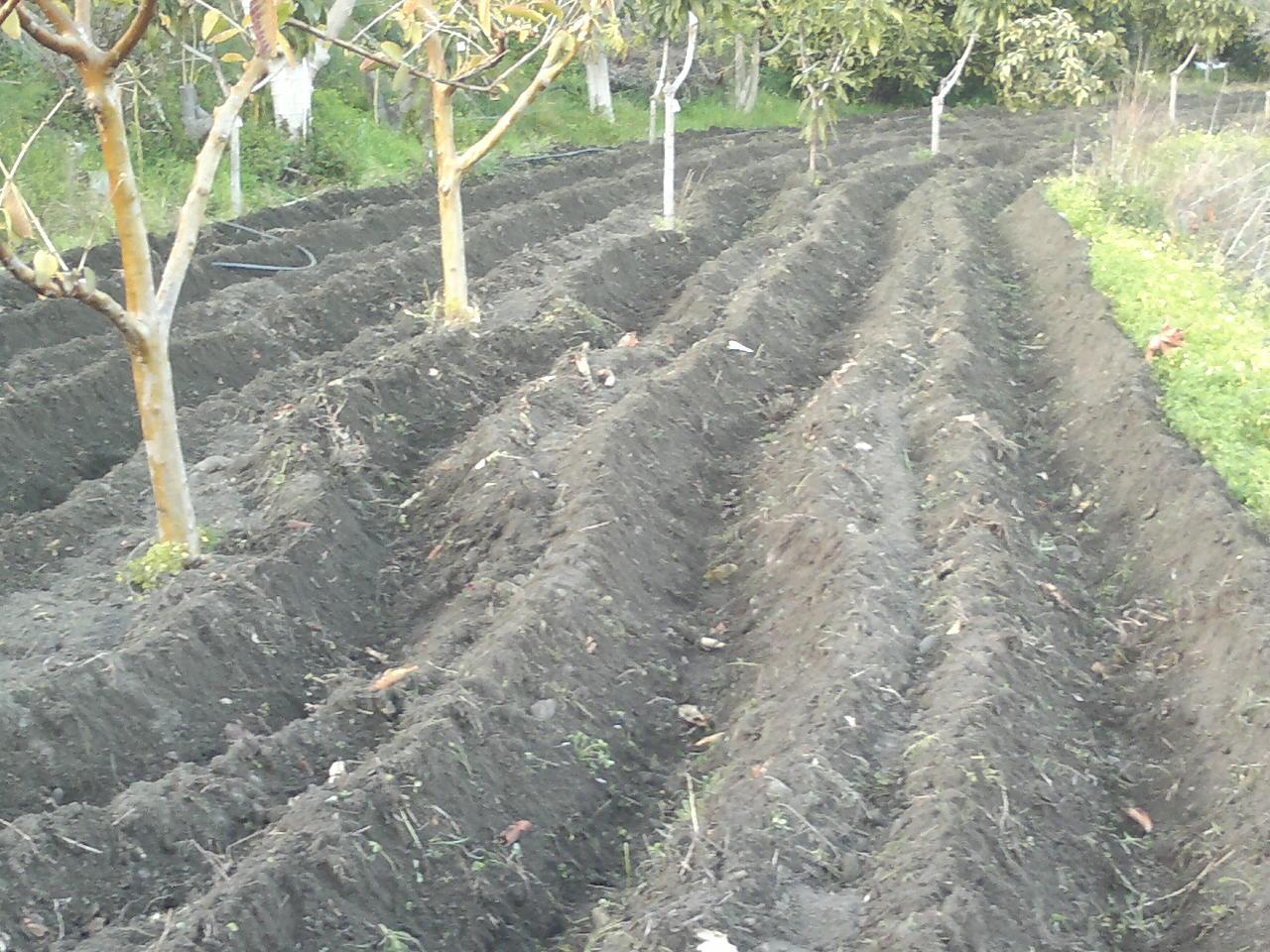 Diario de un campesino preparando la tierra para el - Preparacion de la tierra para sembrar ...