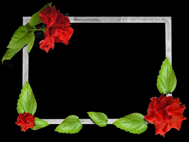 Gifs y fondos pazenlatormenta marcos para fotos de flores - Marcos clasicos para fotos ...