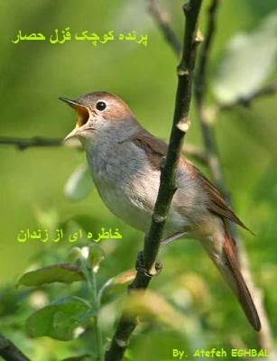 پرنده کوچک قزل حصار