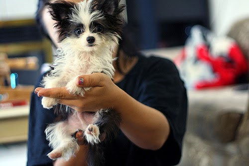 Top 5 Puppies that can fit in your hand