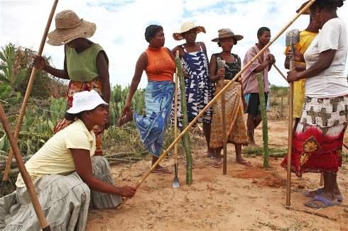 Per MadagascarCibo Mio In Di LavoroPiano Le Il Mantenere Cambio 76Yfybg