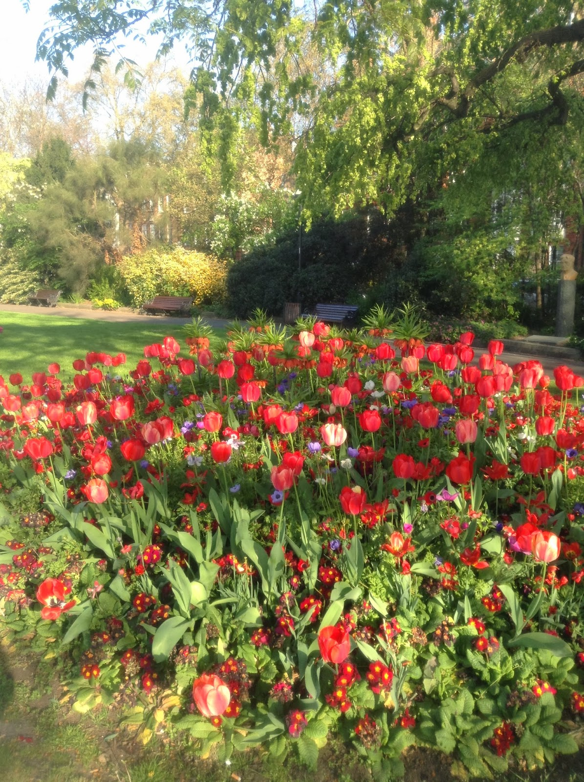 Tulipa , Anemone and Primula at Chelsea Embankment, Photo by Mercurelli's Garden Design