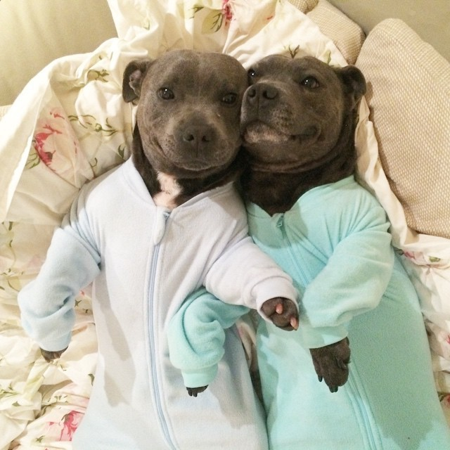 Cute dogs - part 100, dog photos, best dog pictures, funny dog photo