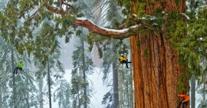 3.200 Year Old Giant Tree in the Snows: One Photo, 126 Frames, 2 Billion...