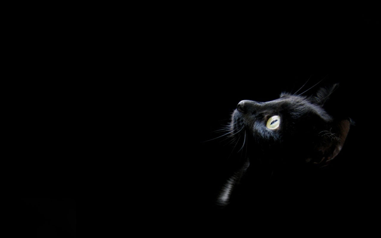 Amazing Black Color Wallpapers and Background for your Desktop