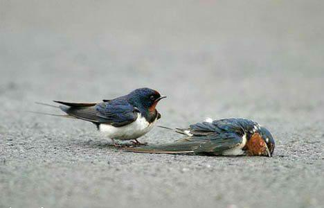 http://3.bp.blogspot.com/-gDFYP9btd6A/TzpMuyU5KSI/AAAAAAAACRc/LD1u5w28Eus/s1600/animal_love_pictures_birds_6.jpg