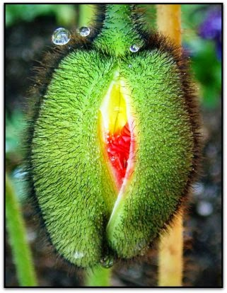 experto masaje vaginal