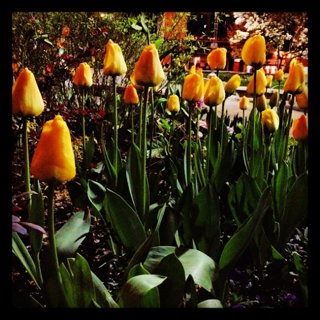 Vancouver, stroll, tulips, spring, beautiful flowers