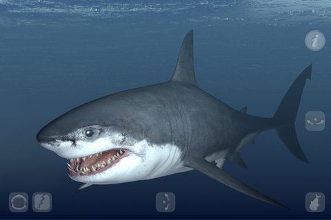 7 ? Talking Great White : My Pet Shark: Rating: ★★★?