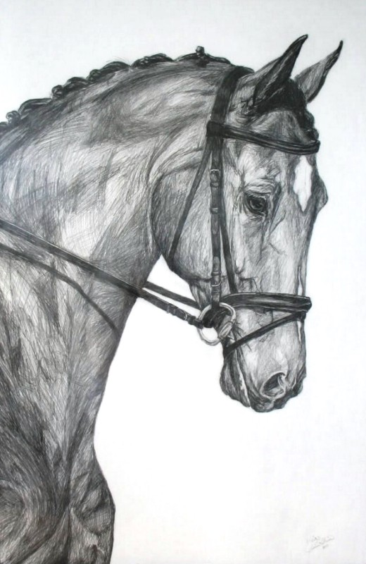 Pintura Moderna y Fotografa Artstica  A10 Dibujos de caballos