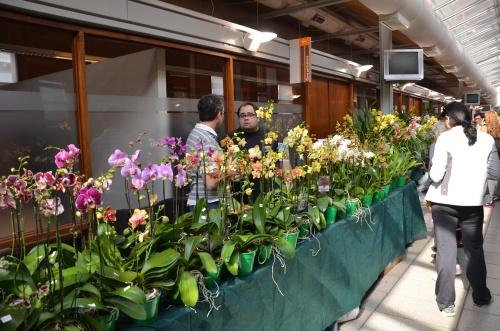 Grupo orquide filo del norte santafesino 11 exposici n for Viveros en rosario