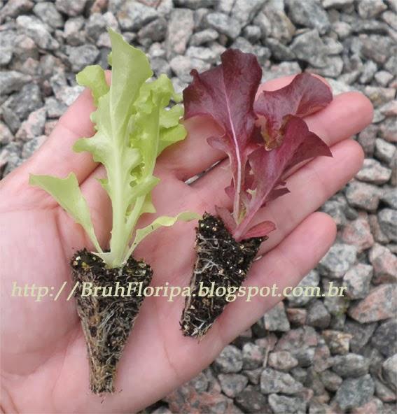 Mudas e Plantas