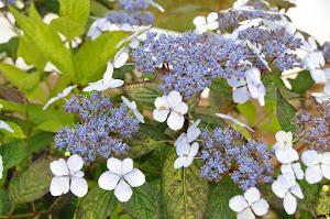 Blooms in the Memory Garden
