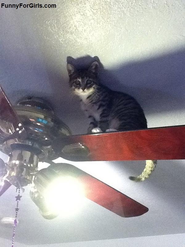 cat on ceiling fan