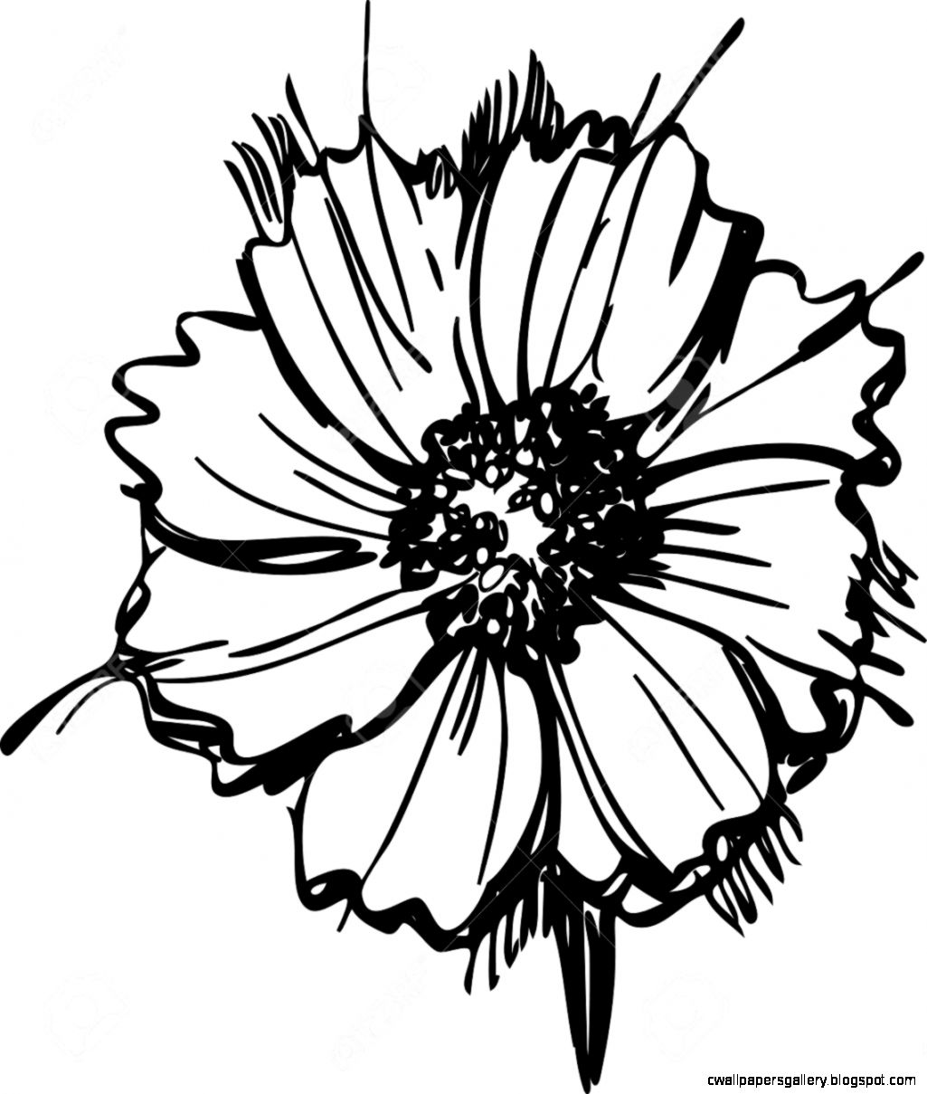 Sketch Wild Flower Resembling A Daisy Royalty Free Cliparts