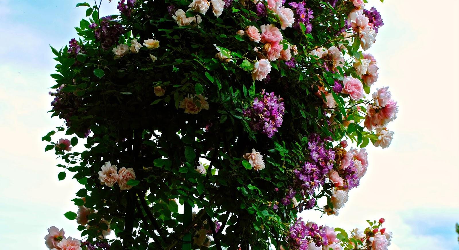 Flowers from Monet's Garden
