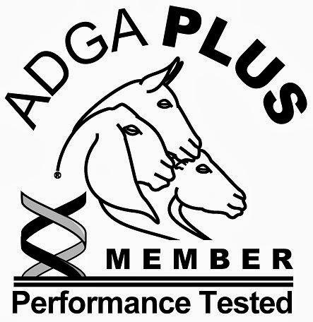 ADGA Plus