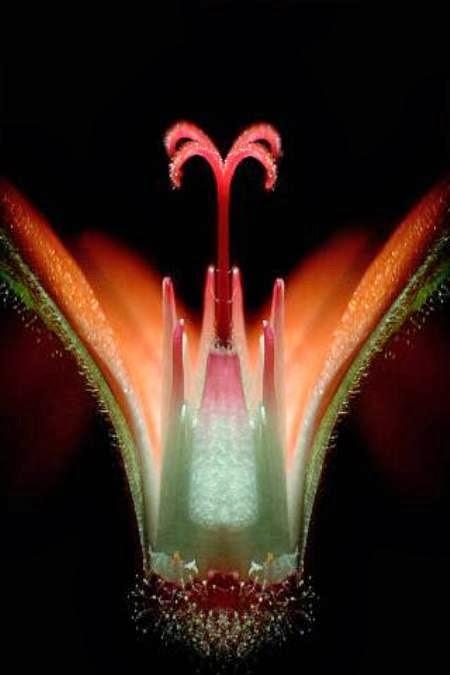 10 صور مجهرية مذهلة A98289_geranium