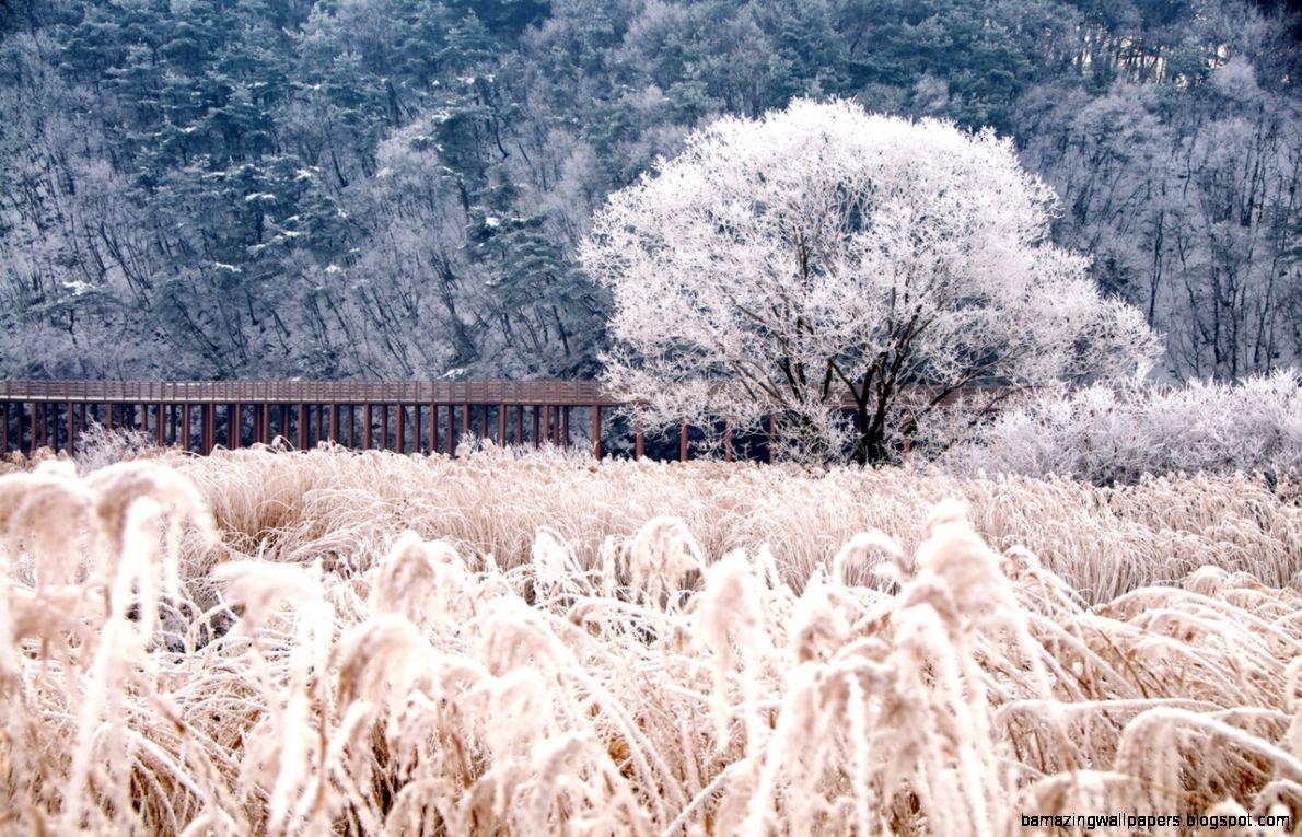 Soyang Bridge No 5 Chuncheon Korea   cold winter snow ice