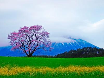 Arbol de cerezas, montañas y paisaje.