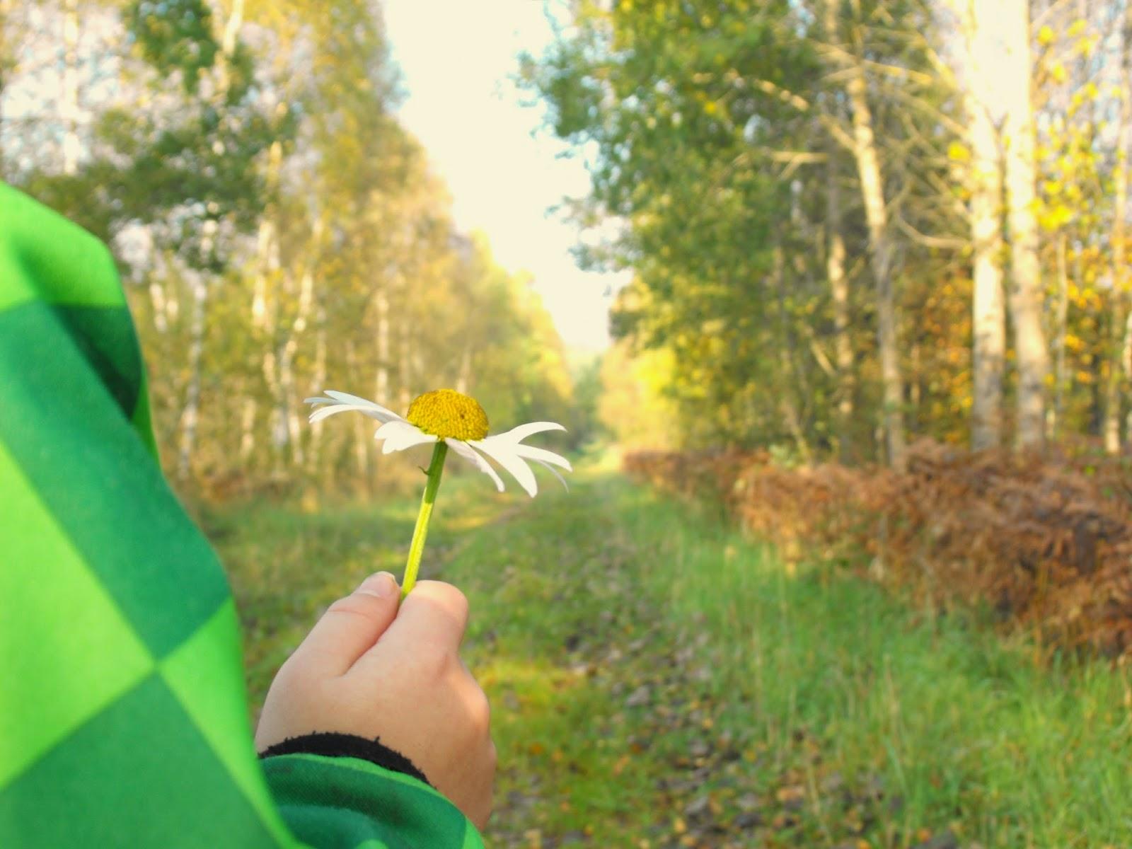 promenad, höst, autum, Sösdala, Hässleholm, landet, Hässleholms kommun, Sosdala, vacker natur, mossaspåret