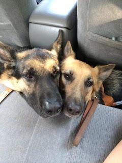 Tank and Yulie enjoying an Uber ride