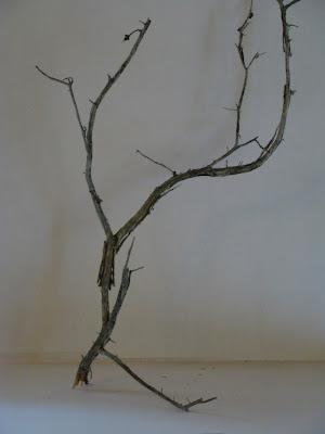 modèle branche nature aquarelle stage