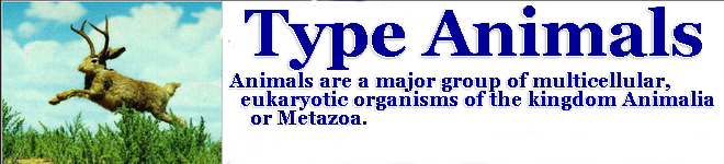 Type Animals