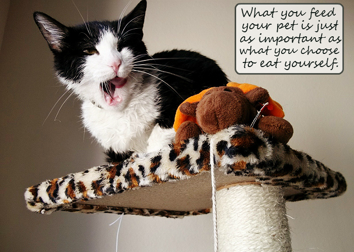 Hungry kitty- do you feed your pets human quality food? #GoodlifePet #Shop #Cbias