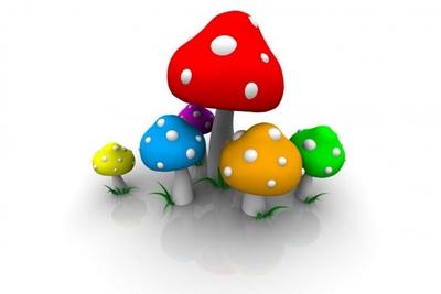 Jamur / Mushroom