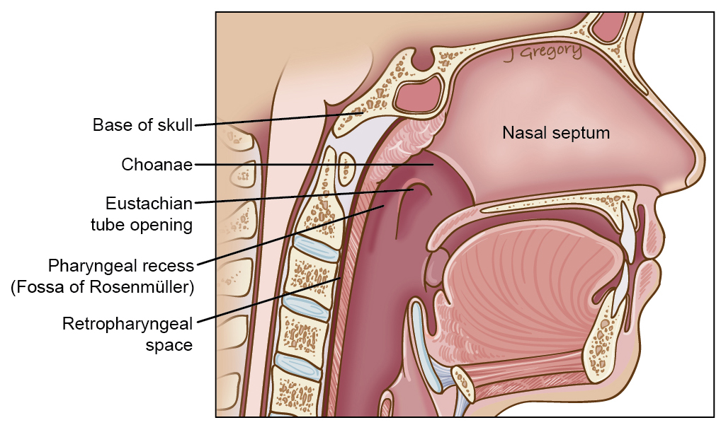 Laser surgeries in Ent Head Neck, malaysia: February 2014