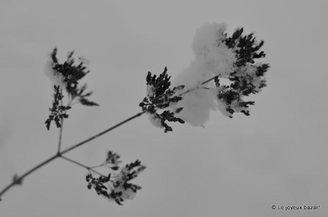 Forêt sous la Neige - l'Isle Adam