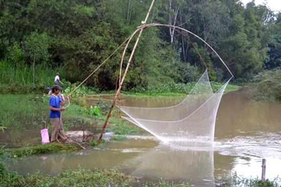 Kéo Cá Mùa Mưa Của Dân Quảng Ngãi Quê Tôi