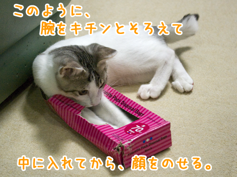 猫が箱の中に隠れる方法