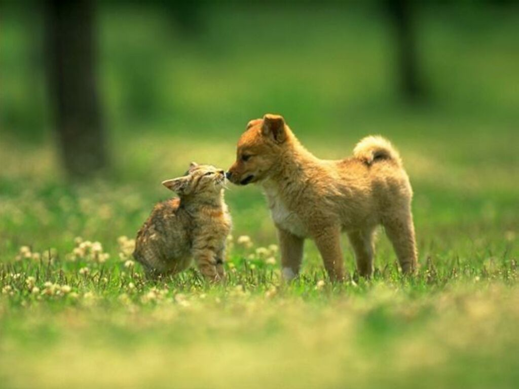 cute puppy and kitten pictures