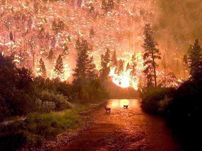 Kebakaran Hutan Bitterroot