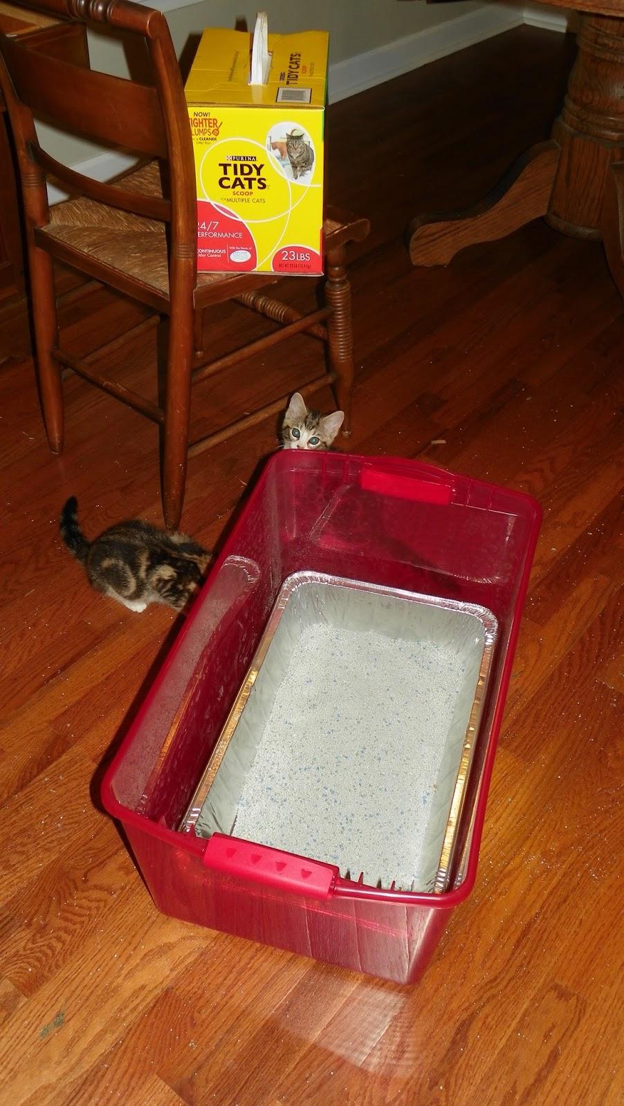how do you get cat pee out of carpet