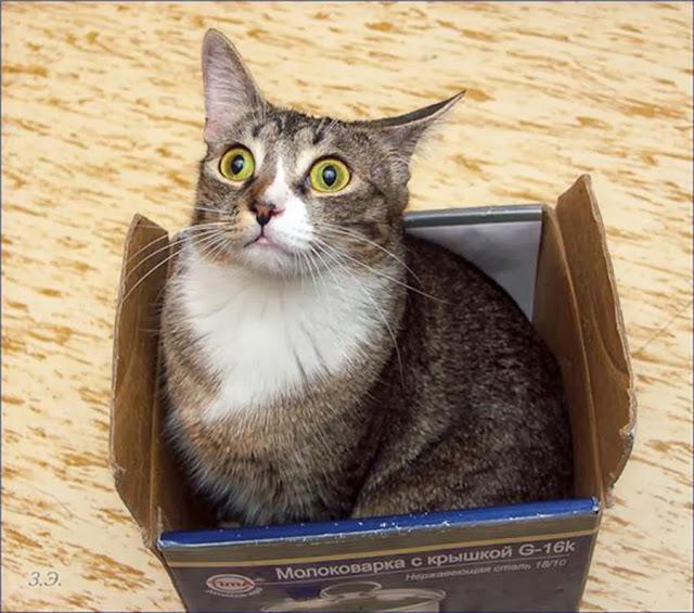 Как упаковать подарок, когда в доме есть кот