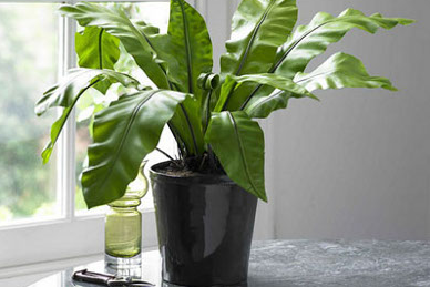 home decorations how to decorate your home with artificial plants
