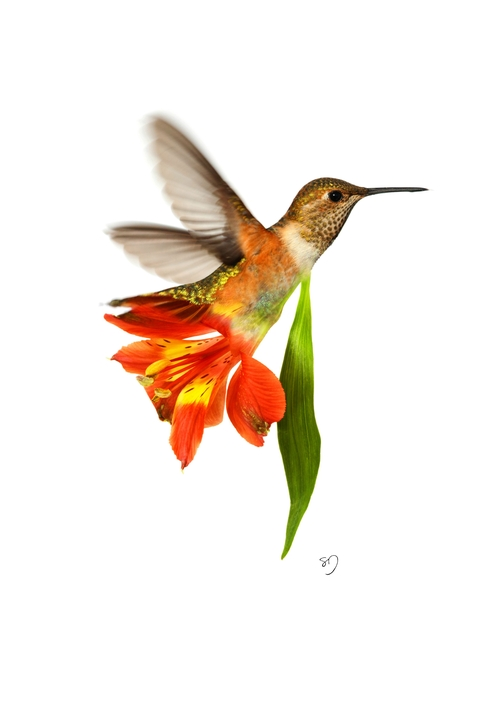 08-Humming-Bird-Flower-Sarah-DeRemer-You-Are-what-You-Eat-Photo-Manipulation-www-designstack-co
