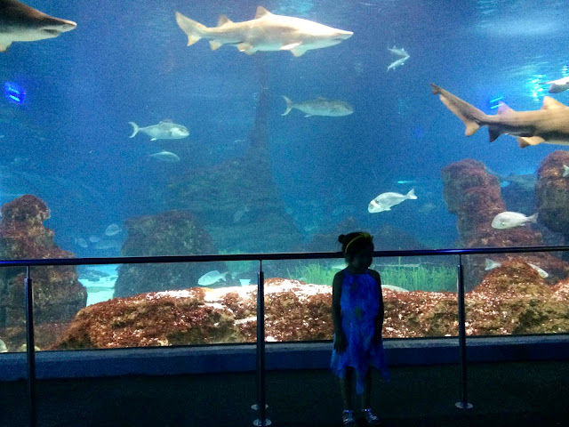 Shark Tank | Barcelona Aquarium | Barcelona | Chichi Mary Blog